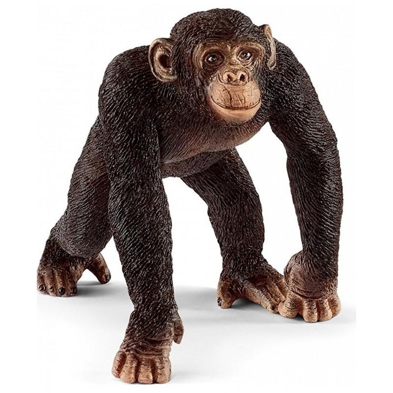Chimpanzé mâle - Wild Life
