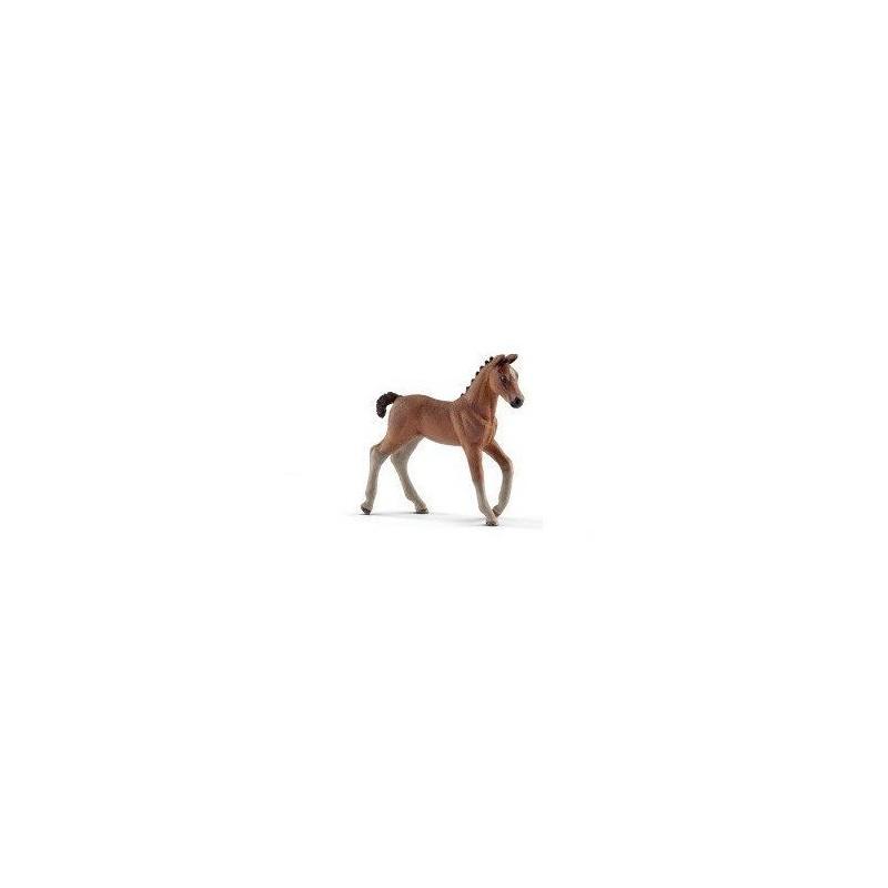 Poulain hanovre - Horse Club