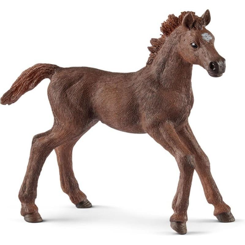 Poulain Pur-sang anglais - Horse club