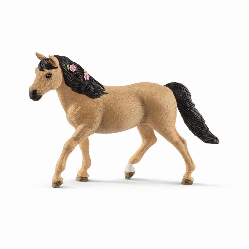 Poney connemara femelle - Horse club